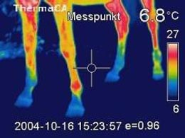 WildThermography
