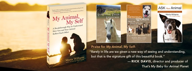 Home Animal Communication Marta Williams